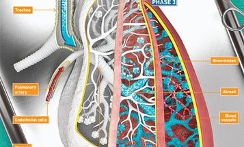 How Scientists Grow Working, Made-To-Order Lungs