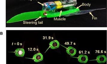 Soft manta ray robot glides electrically through the sea