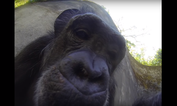 A Chimp Selfie, Ghostly Octopus, And The Biggest Photo Of Manhattan Ever