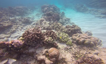 El Nino Is Turning The Pacific Ocean's Coral Reefs Into Ghost Towns