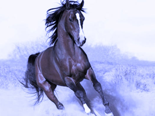 Was Twitter Account Horse_ebooks A Prank, Or Art?