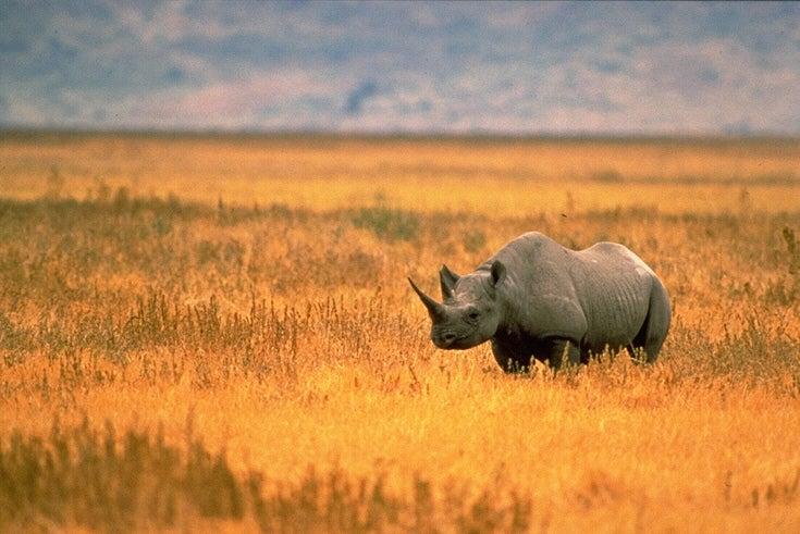 Google Funds Secret Technology For Hunting Down Poachers