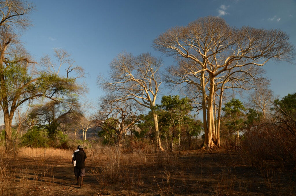 Yao honey-hunters search for honeyguide birds in the Niassa National Reserve, Mozambique.