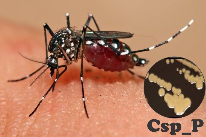 A Microbial Means To End Dengue and Malaria