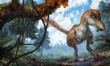 What are dinosaur feathers like?