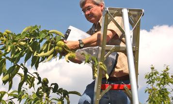 GMOs—Beyond Pesticides