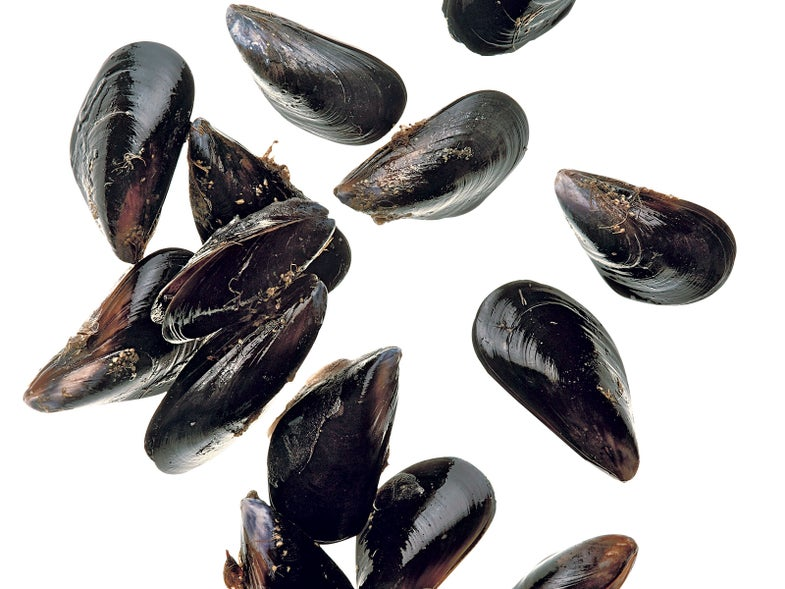 Glue With More Mussel
