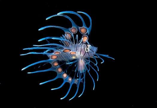 10 Stunning Underwater Photos