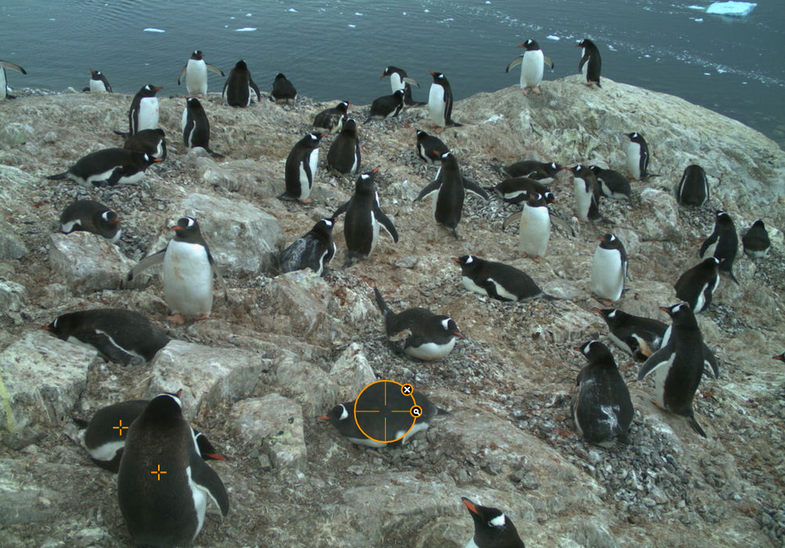 Help Scientists By Marking Penguins In Pictures