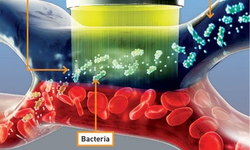 A Magnetic Machine Plucks Pathogens from Blood