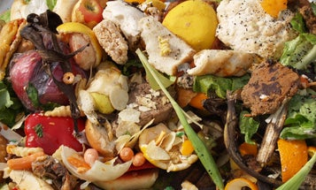 This Earth Day, cut down your food waste