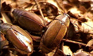 The Cockroach Milk Debate: Super Food Or Just Super Hype?