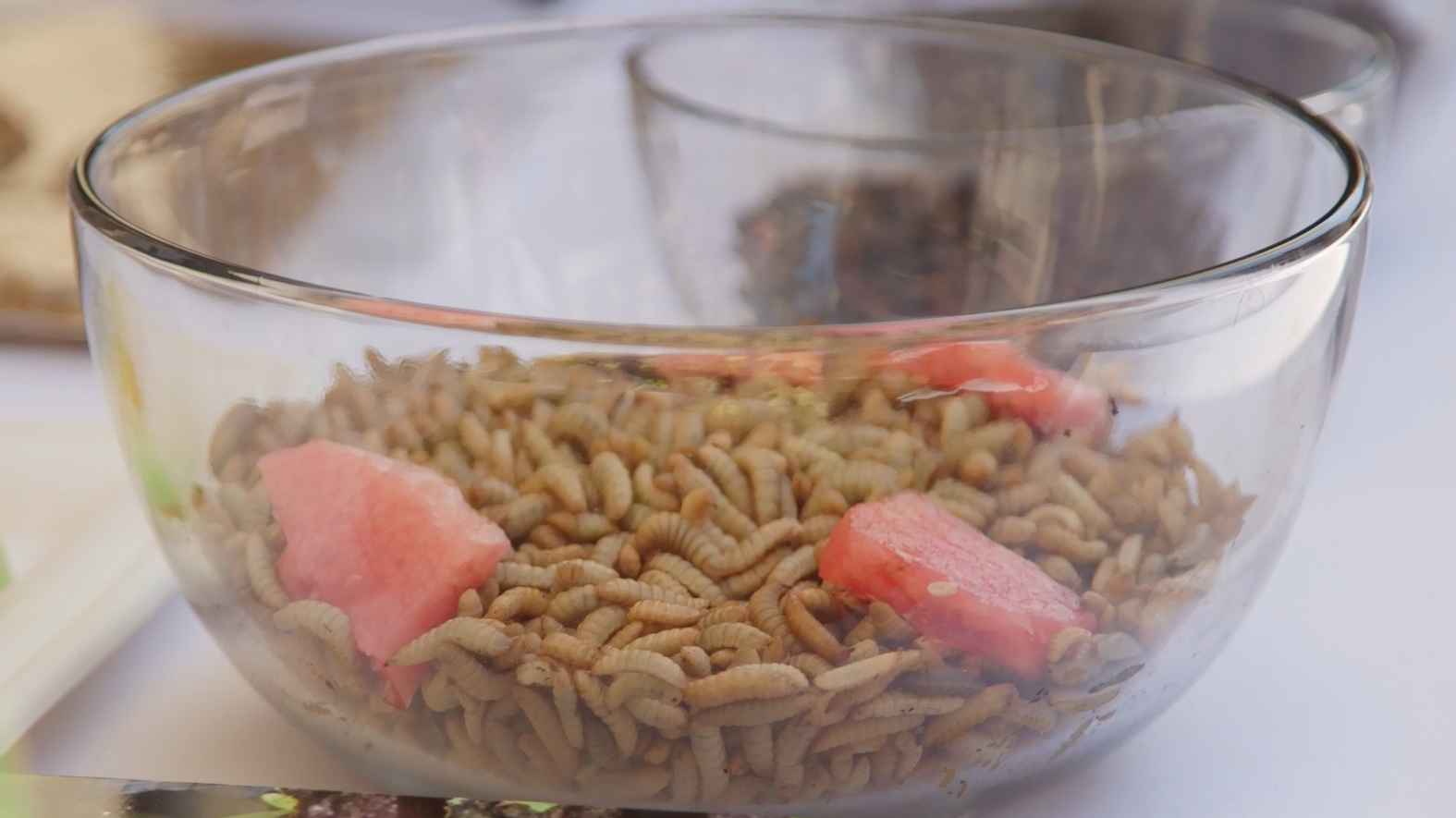 These Bugs Recycle Food Waste