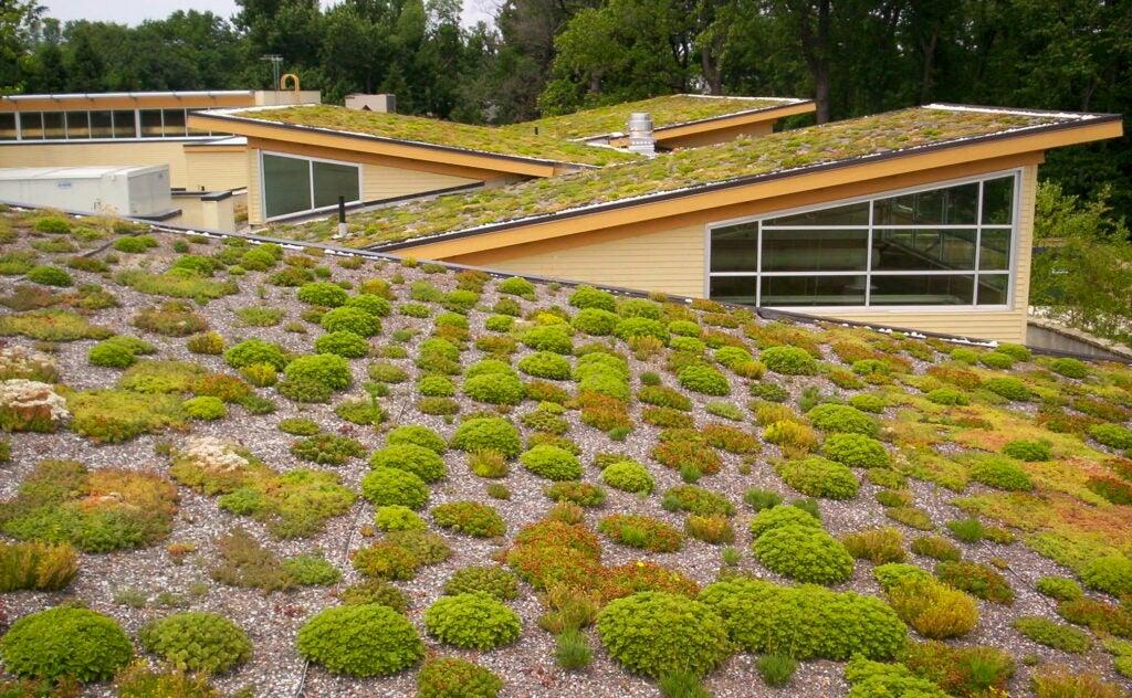 Green roof at the Walter Reed Community Center in Arlington, Virginia.