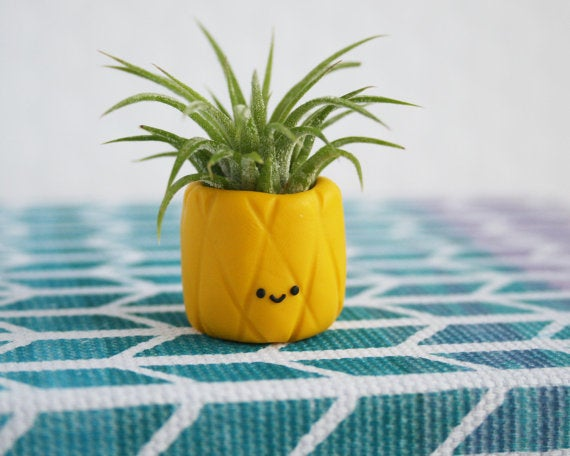 Pineapple planter air plant