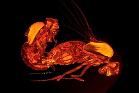 Frozen Fruit Fly Sex Is As Freaky As It Looks