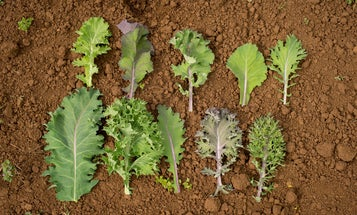 How to grow custom greens designed by chefs