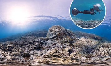 Q&A: The Researchers Documenting The World's Reefs