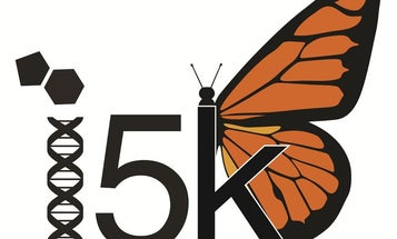 'Manhattan Project' of Insects Will Sequence Bug Genomes to Help Make Better Pesticides