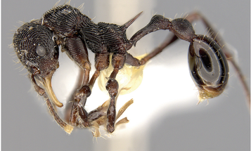 A Devil Frog Puked Up This New Ant Species