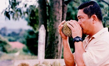 An Indigenous Malaysian Language Describes Smells As Precisely As English Describes Colors