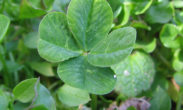 Are 'Lucky Streaks' Real? Science Says Yes