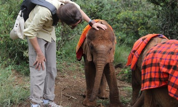 A Visit To An Elephant Orphanage