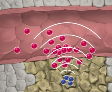 Nanodrug Swarms Use The Human Body's Biocommunications System to Coordinate Their Attack