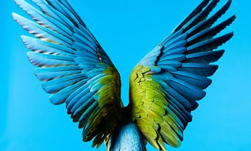 Parrots Teach Scientists To Make Fade-Proof Colors