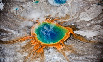 Giveaway: Yellowstone, Battle for Life