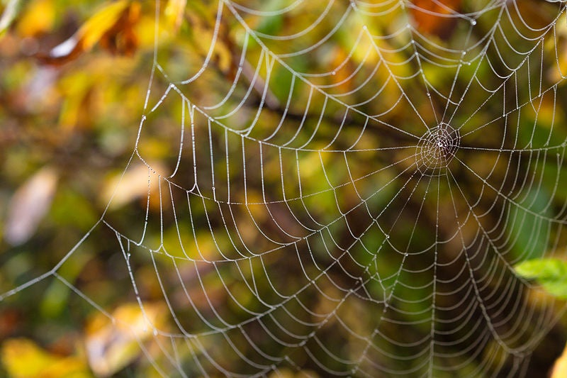 New properties discovered in spider silk