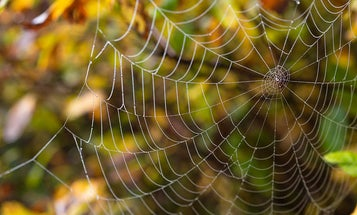 This App Helps You Identify Which Spider You Found In Your Bed