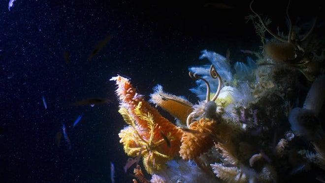Antarctic giant sponge