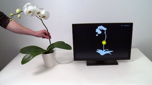 Video: Make Your Houseplant a Touchscreen? Or Theremin? What Is Going On Here