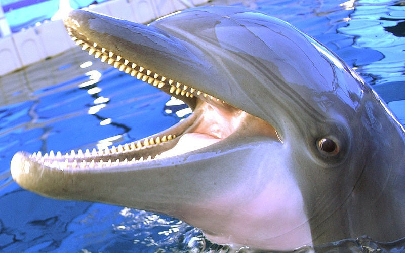 """Talking to Dolphins: New """"Dolphin Speaker"""" Produces Full Range of Dolphinese Sounds"""