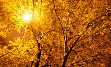 Trees Infused With Glowing Nanoparticles Could Replace Streetlights