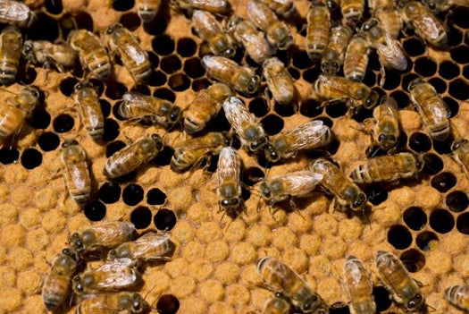 Tough, Lightweight Synthetic Honeybee Silk Could Revolutionize Textiles, Composites