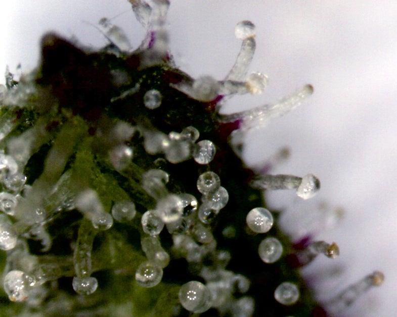 Chemical Found in Marijuana