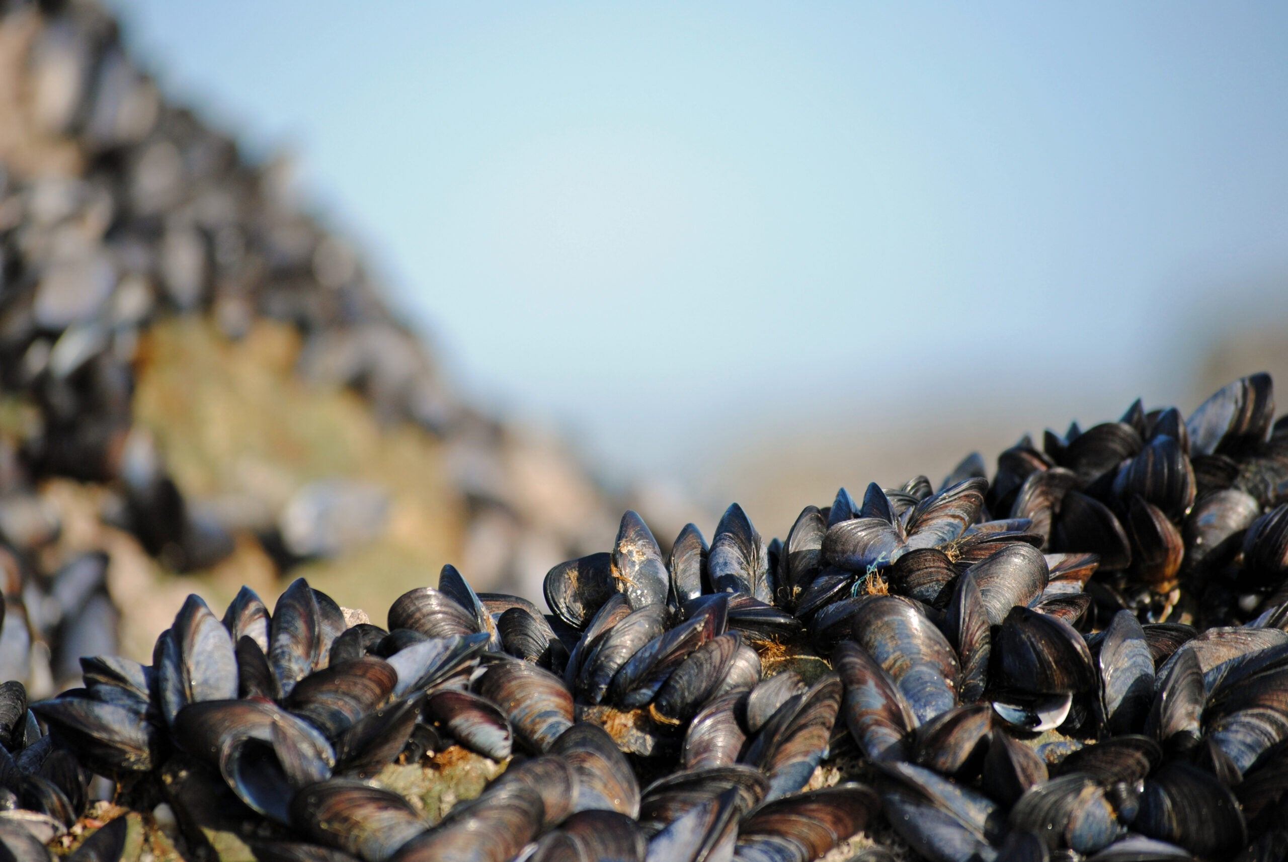 Mussels Inspire New Flame Retardant