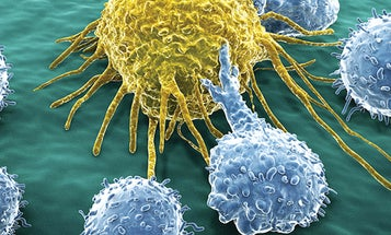 How It Works: Cancer-Fighting Immunotherapy