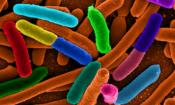 Study Shows How Bacteria Could Generate Radio Waves