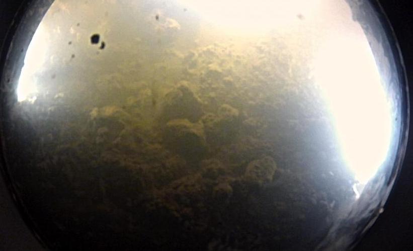We Have Life! Scientists Confirm Microbes Beneath Antarctic Glaciers