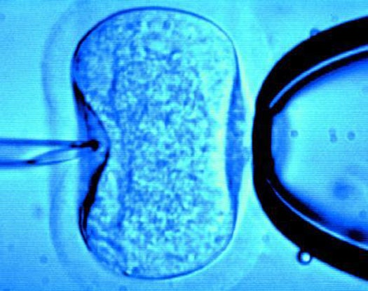 Squishy Embryos Might Be The Most Viable