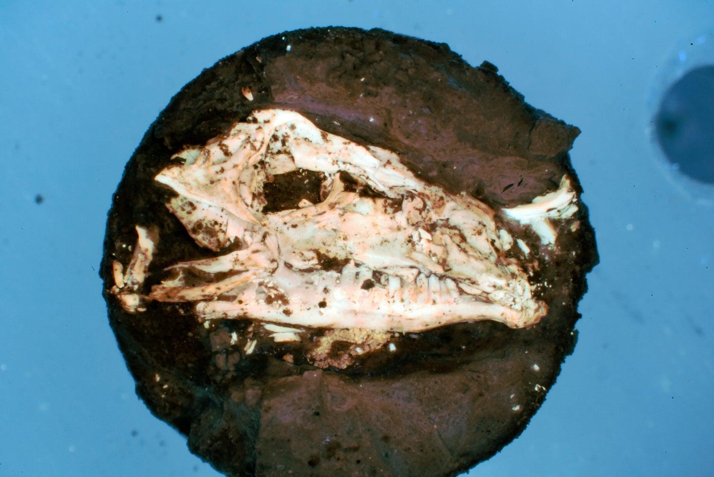 lizard head fossil field museum