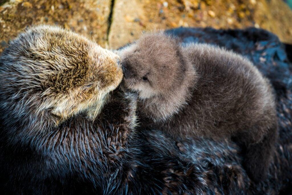 """""""Otter"""