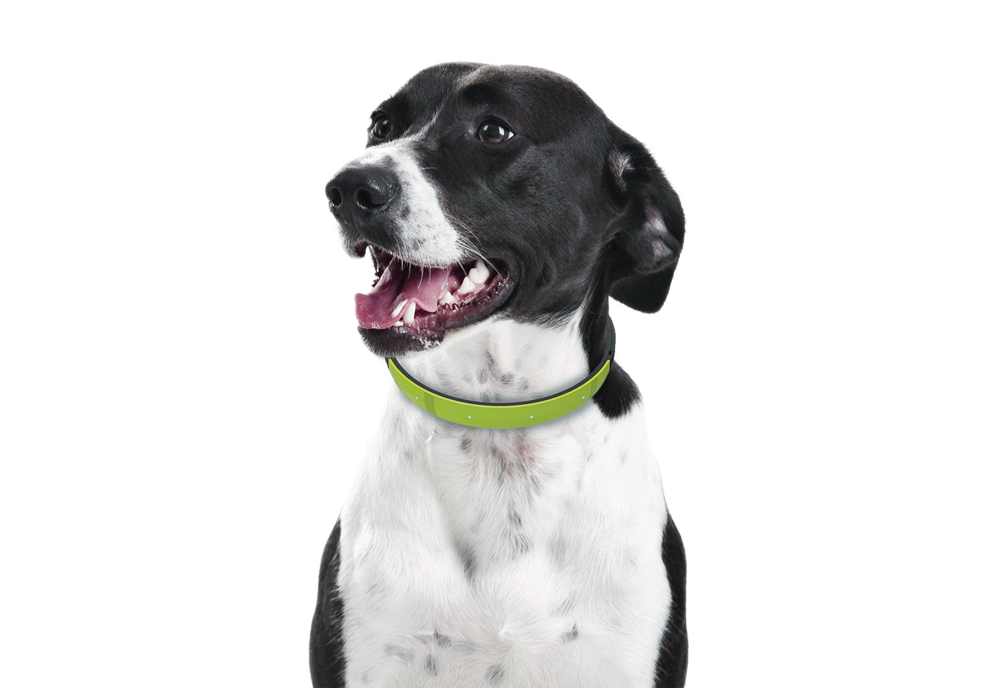 A dog collar that's smart