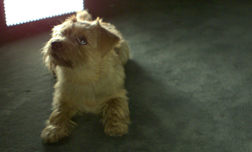 Slow-Motion Video: A Puppy Being Adorable