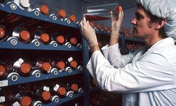 """Experimental """"Body Reboot"""" Drug Begins Trial As Preemptive Preventer Of Diabetes"""