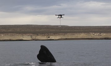 Watch This Drone Catch Whale Snot