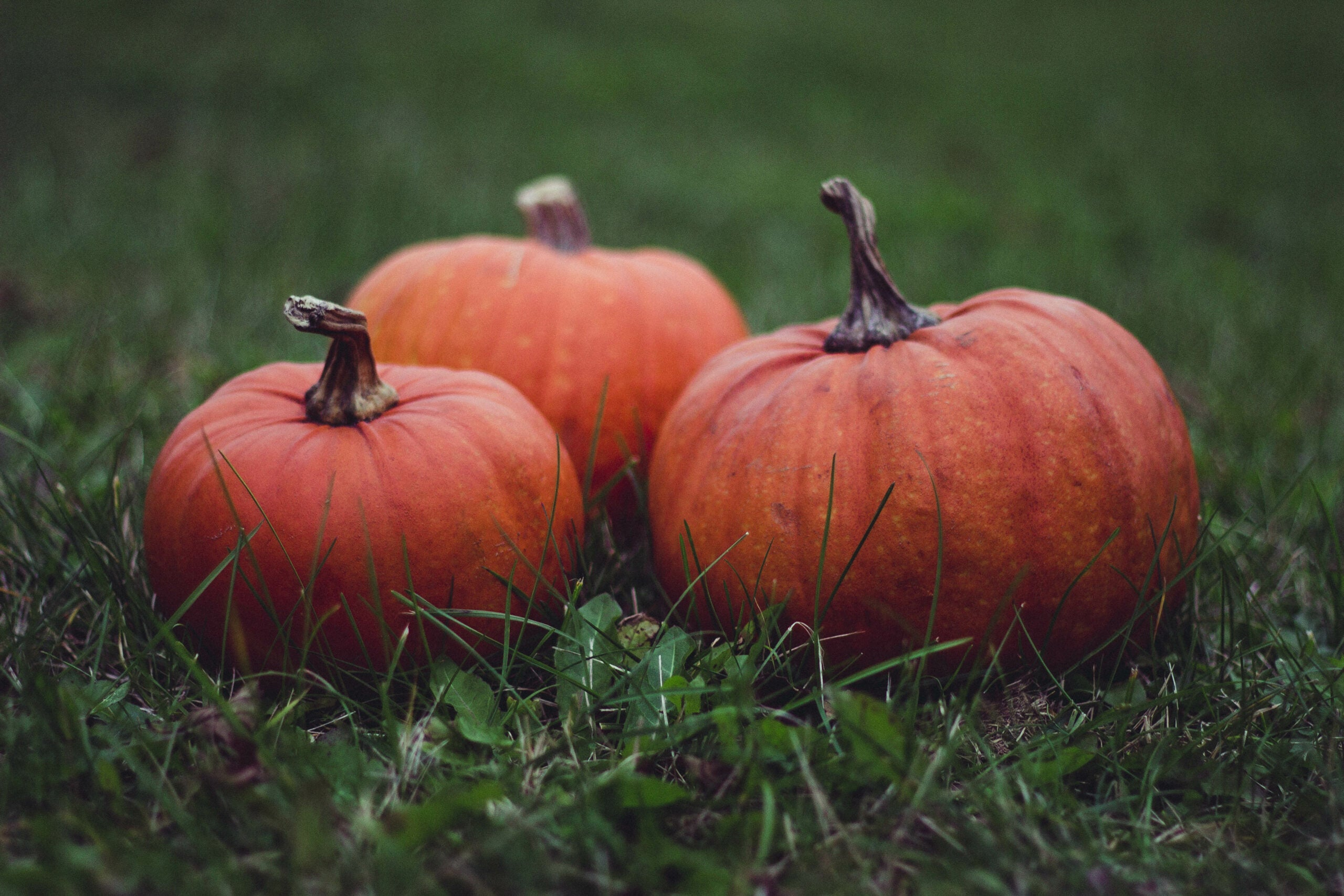 Pumpkins evolved from a literal genetic (monster) mash-up